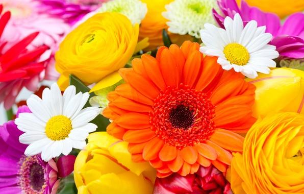 Picture flowers, chamomile, tulips, gerbera, flowers, tulips, daisies, gerberas