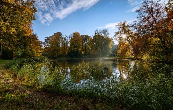 Picture autumn, the sky, grass, the sun, trees, pond, Park, Netherlands, De Haar Castle Park