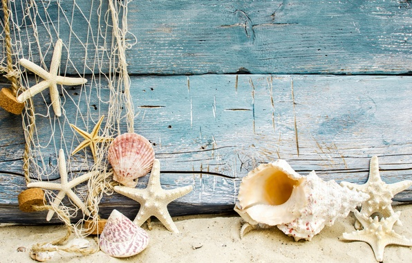 Picture sand, beach, shell, beach, wood, sand, marine, seashells, starfishes