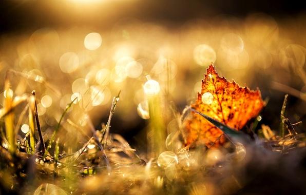 Picture autumn, grass, macro, yellow, nature, sheet, brown