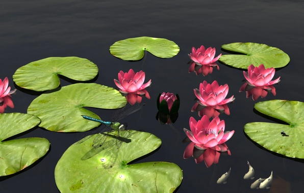 Picture leaves, fish, flowers, nature, pond, dragonfly