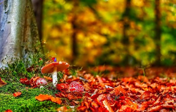 Picture forest, grass, leaves, trees, mushrooms, mushroom