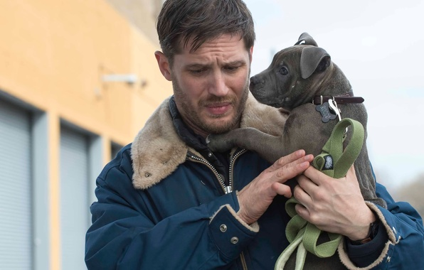 Picture Tom Hardy, Common Fund, The Drop