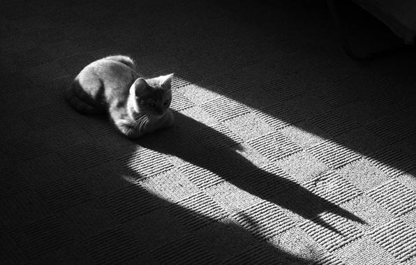 Picture shadow, Koshak, Black and white, 157, Mat