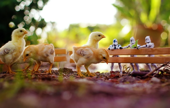 Picture macro, toys, chickens, star wars, zahir batin
