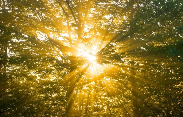 Picture forest, summer, the sun, rays, light