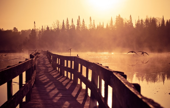 Picture nature, fog, river, duck, morning, couples, geese, a pleasure