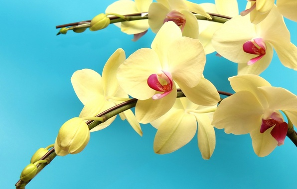 Picture branch, orchids, exotic