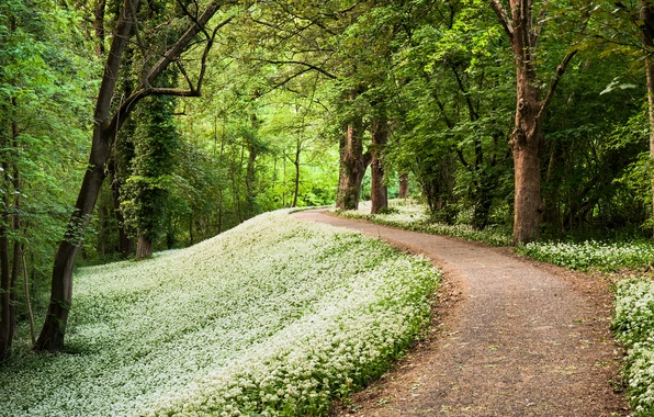 Picture forest, trees, spring, Germany, track, path, Germany, forest Park, ramsons