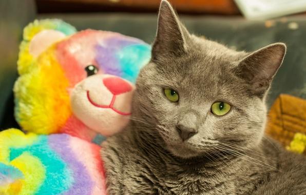 Picture look, toy, Koshak, Tomcat