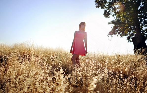 Picture field, summer, girl, light