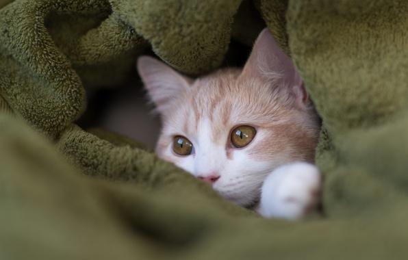 Picture muzzle, plaid, kitty, Hannah, © Benjamin Torode