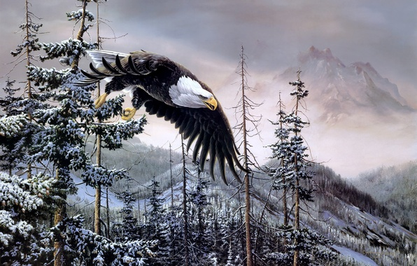 Picture winter, forest, mountains, birds, eagle, spruce, painting, bald eagle, Heaven & Earth, bald eagle, Christopher …