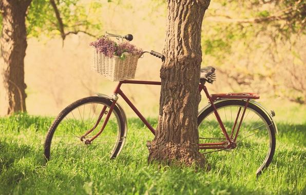 Picture greens, grass, leaves, trees, flowers, nature, bike, background, tree, Wallpaper, basket, mood, wheel, purple, flowers, …
