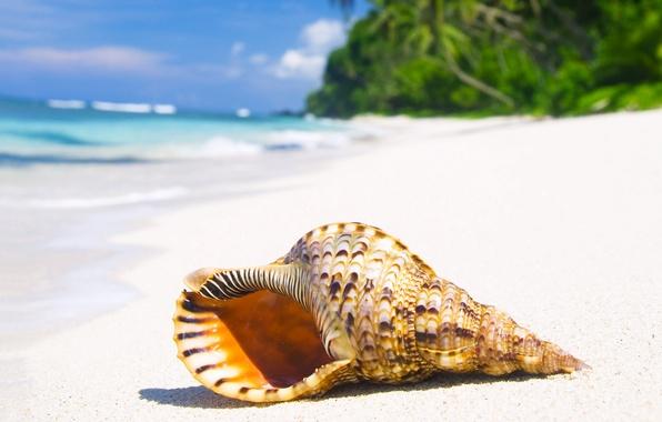 Picture sand, sea, beach, the sun, tropics, the ocean, shell, summer, beach, sea, ocean, coast, blue, …
