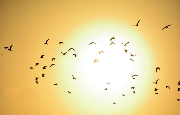 Picture the sky, the sun, sunset, birds, pack