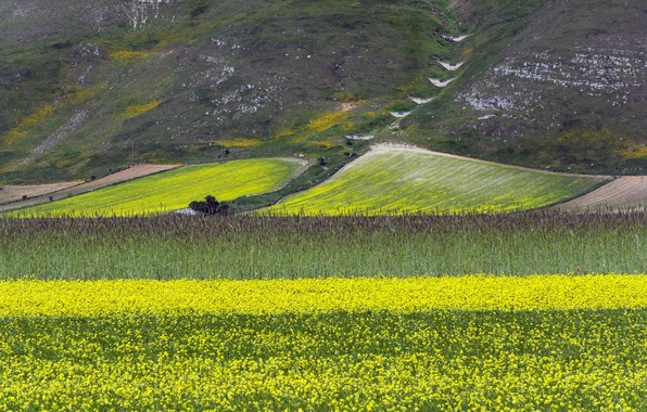 Picture field, flowers, mountains, slope, meadow