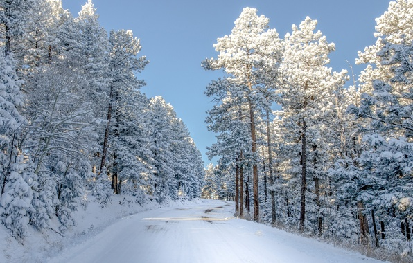 Picture winter, road, light, snow, trees, nature, Colorado