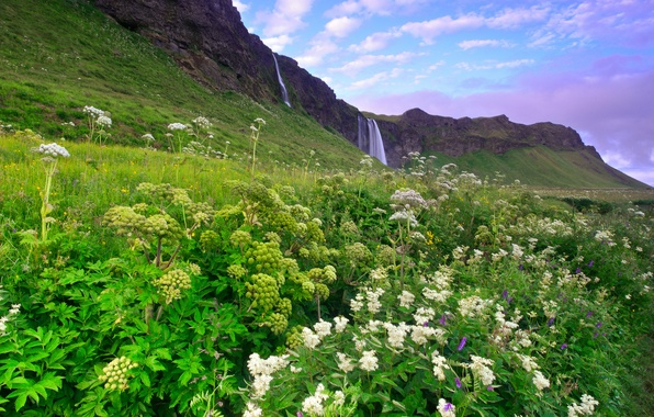 Picture greens, the sky, grass, clouds, flowers, mountains, hills, blue, waterfall, morning, Iceland, lilac