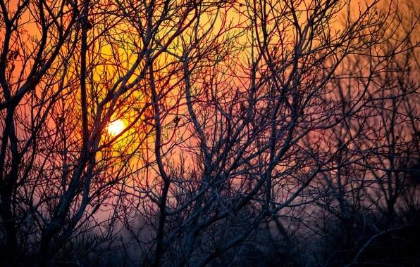 Picture the sky, the sun, trees, sunset, branches, nature, the evening