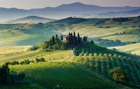 Picture trees, house, field, Italy, the vineyards, Tuscany