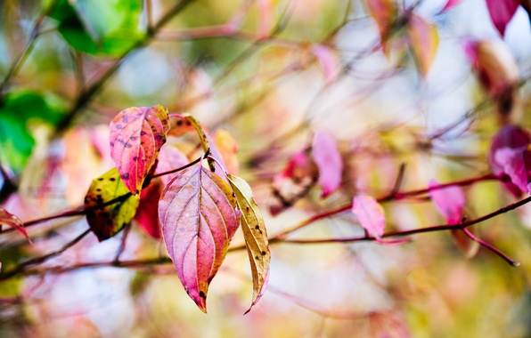 Picture autumn, macro, branches, nature, tree, yellow, Leaves, red, bokeh