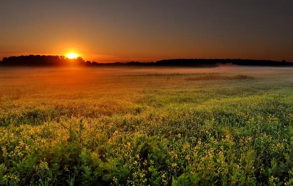 Picture field, the sun, landscape, nature, fog, sunrise, dawn, morning