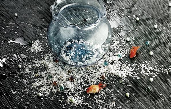 Picture fish, mood, aquarium