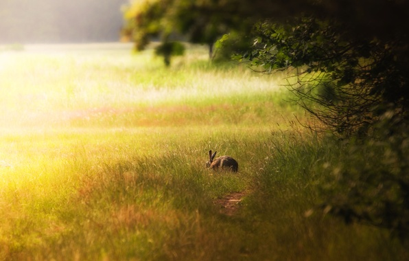 Picture forest, light, glade, hare, rabbit, Bunny, Saari