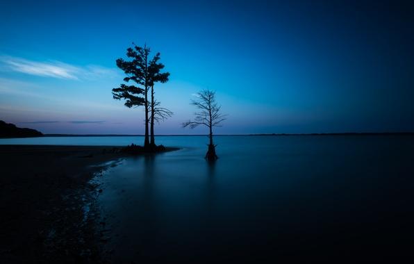 Picture sea, night, tree