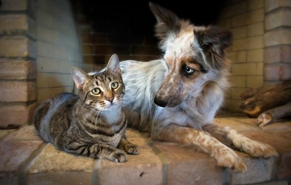 Picture cat, dog, friendship