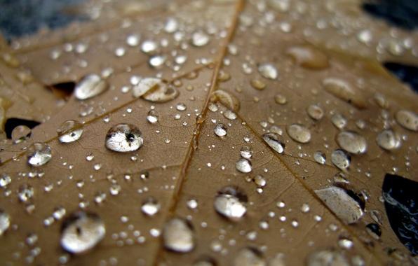Picture water, drops, macro, sheet, rain, cool, autumn