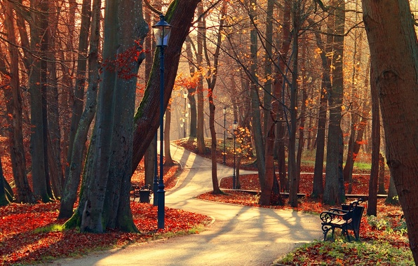 Picture autumn, forest, leaves, trees, bench, nature, Park, view, hdr, walk, forest, alley, trees, nature, park, ...