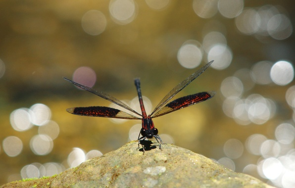 Picture glare, background, stone, dragonfly, red