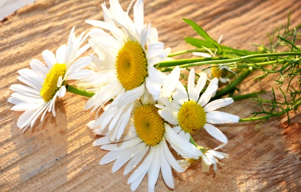 Picture white, flowers, yellow, background, widescreen, Wallpaper, chamomile, Daisy, wallpaper, flower, widescreen, background, full screen, HD …