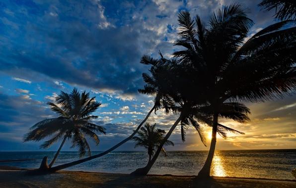 Picture sea, sunset, tropics, palm trees, shore