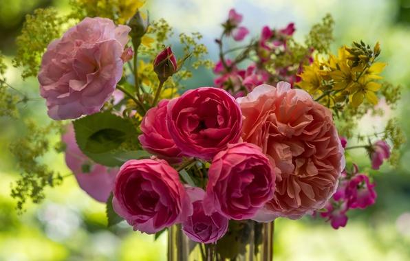 Picture roses, bouquet, bokeh