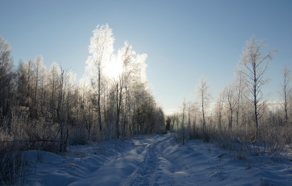 Picture frost, road, forest, the sky, the sun, light, snow, trees, Winter, trail, shadow, frost, walk, ...