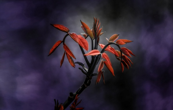 Picture leaves, background, plant, branch