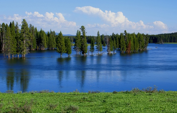 Picture forest, the sky, trees, lake, river, spring, spill, flood