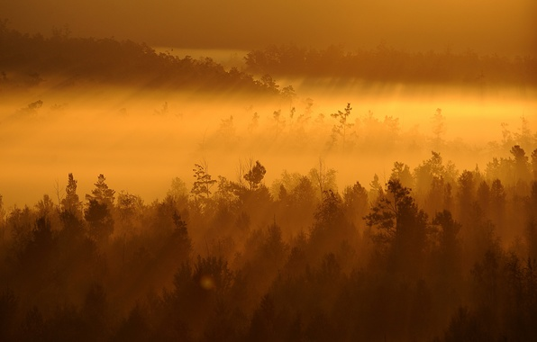 Picture trees, landscape, sunset, fog
