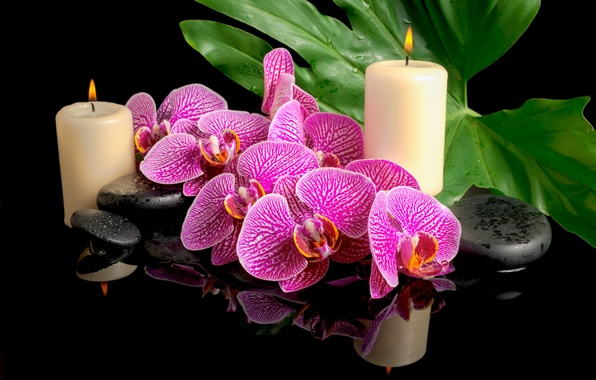 Picture drops, flowers, leaf, candles, orchids, Spa stones