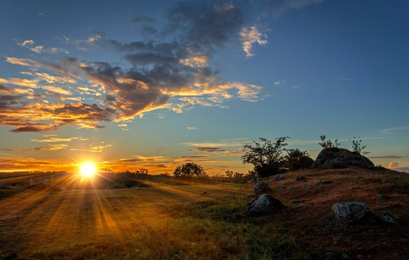 Picture field, the sky, grass, the sun, clouds, rays, trees, stones, dawn