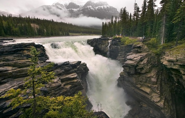 Picture forest, mountains, fog, river, rocks, waterfall, stream