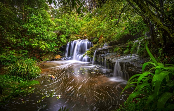Picture forest, trees, river, stones, thickets, waterfall, stream