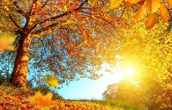 Picture autumn, forest, leaves, the sun, trees, branches, yellow, the edge, gold
