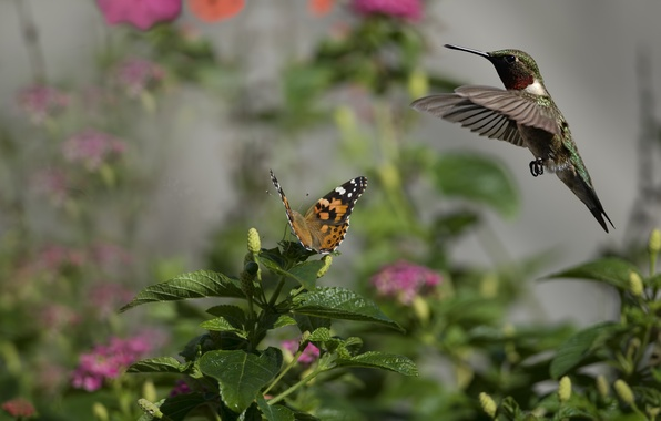 Picture flowers, bird, butterfly, Hummingbird, insect, Sunny