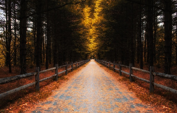 Picture road, autumn, forest, leaves, trees, the fence