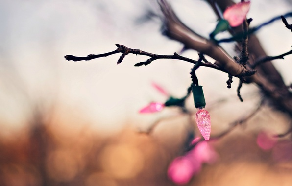 Picture macro, background, tree, pink, holiday, Wallpaper, blur, branch, lights, wallpaper, garland, widescreen, background, bokeh, full …