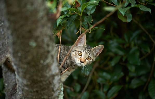 Picture cat, branches, kitty, tree, Peeps
